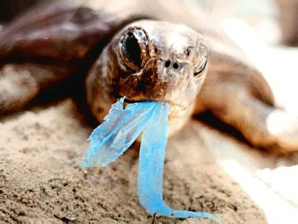 environmental damage plastic bags