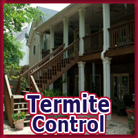 Alternative Pest Control - Termite Control