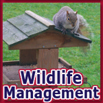 Alternative Pest Control - Wildlife Management