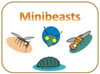 Minibeasts heading