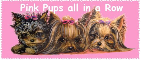 More Yorkie Info Ms Yorkies For Sale Ms Yorkie Puppies For Sale