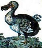 The Dodo