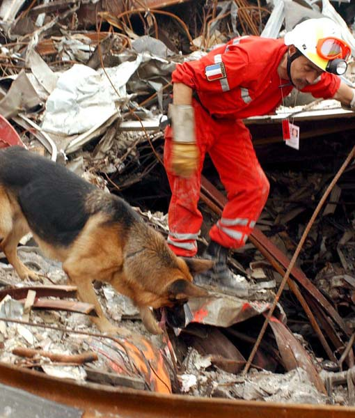 Search And Rescue Dog Training Schools In Pa