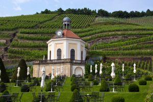 Saxony Wine