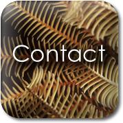 Touchstone Massage: Contact