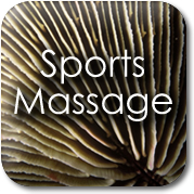 Tochstone Massage: Sports Massage
