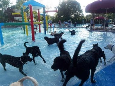 Rocky River Pool End of Year Dog Splash