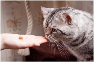 Hand feeding treats to Cat