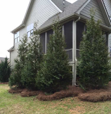 privacy trees atlanta