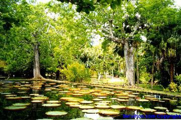 One Of The Best Botanical Gardens In The World