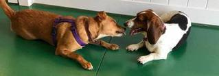 Dogs meeting dogs at V.I.Pet Resort